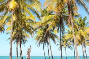 Mulher em pé em frente a praia, curtindo férias com céu azul, em meio a coqueiros.